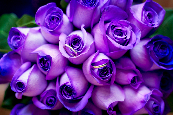 Purple Wedding Roses