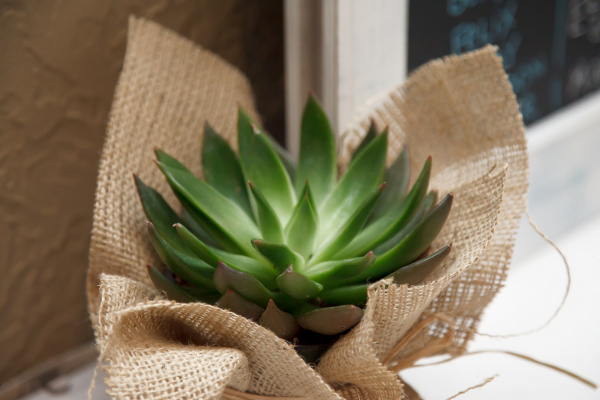Succulent Burlap Decor