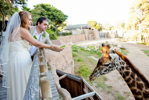 Wedding At The Zoo