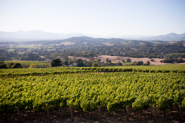 Napa Valley Private Estate Views
